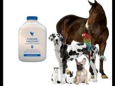 ▶ Forever Freedom Aloe Vera Juice for Animals Reviews, Testimonies - YouTube
