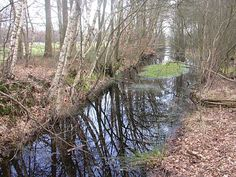 Gracht met oude landweer (links) op de gemeentegrens tussen Hof van Twente en Borne, tussen de grote boermarke van Delden en de marke Zenderen. Op de achtergrond doorsnijdt de A1 de landweer aan de rand van Twickel.