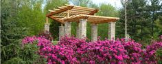 The pergola in the Eliot and Linda Paine Rhododendron Discovery Garden.
