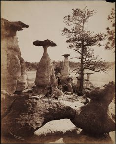 Discuss in an essay of 200 words how the photographs of William Henry Jackson influenced the ?