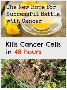 Miracle Cancer cure from Dandelion Tea Recent study shows that dandelion tea is more effective than chemotherapy