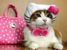 A real Hello Kitty!