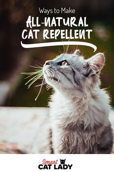 Ways to Make All-Natural Cat Repellent Newborn Kittens, Baby Kittens, Cat Care Tips, Pet Care, Pet Tips, Natural Cat Repellant, Cat Plants, House Plants, Cute Cats