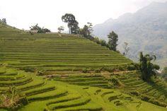 Rice Paddies in Sapa Vietnam by MirahsPhotos on Etsy, $50.00