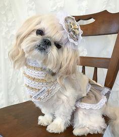 Bella Model, Versace, Gucci, Dogs, Fashion, Moda, Fashion Styles, Pet Dogs, Doggies