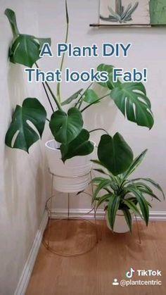 Cheap Plants, Fake Plants Decor, House Plants Decor, Cool Plants, Large Plants, Household Plants, Diy Plant Stand, Indoor Plant Stands, Decoration Plante