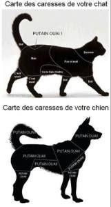 La manière de caresser un chat vs un chien
