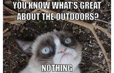That sums it up for me | The 50 Funniest Grumpy Cat Memes