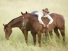 Image result for dan james horses