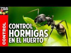 Las hormigas negras son las plagas a las que le tengo más miedo. Nunca sabés cuando van a aparecer y si se la agarran con una planta, no paran hasta que acaban con ella. No creo que haya forma de eliminarlas completamente pero si hay muchisimos métodos para tenerlas bajo control o por lo menos …