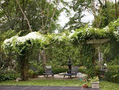 Clematis Tipps Pflegen Sweet Autumn Sorte Weiß Pergola | Garten ... Clematis Kletterpflanze Tipps Pflegen