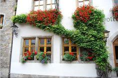 Beautiful window flower boxes - Rothenburg ob der Tauber