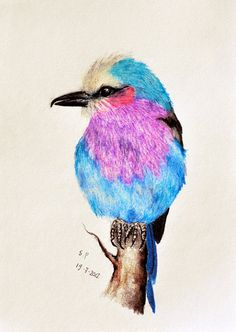 Exotic Bird 13  Original colored pencil drawing 55 by PrismaticArt, $40.00