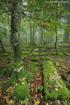 Ancient Forest Road, Basque Country, Spain photo via bortogo