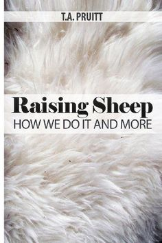 Raising Sheep - How We Do It And More: