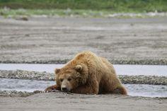 Alaska, zomer 2010   Flickr - Photo Sharing!