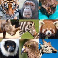 Home - Hamilton Zoo