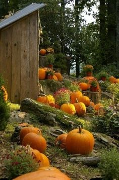 Autumn pumpkin patch - fall is still my favorite time in the garden. Image Halloween, Fall Halloween, Snoopy Halloween, Halloween Clothes, Costume Halloween, Winter Gif, Autumn Scenery, Happy Fall Y'all, Fall Pictures