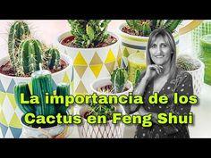 ►5 Consejos Feng Shui 👍 Para el Lugar de Trabajo⭐ - YouTube Feng Shui And Cactus, Consejos Feng Shui, Fen Shui, Bonsai, Youtube, Porches, Blog, Poster, Videos