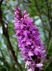 orchidee immagini - Cerca con Google