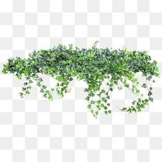녹색 식물,정원,화초,나무,꽃밭,녹화 장식 Dslr Background Images, Art Background, Textured Background, Tree Photoshop, Photoshop Images, Photoshop Rendering, Photoshop Elements, Architecture Graphics, Architecture Drawings