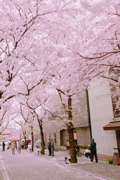 Streets covered with cherry blossom Aesthetic Japan, Travel Aesthetic, Some Beautiful Pictures, Beautiful Places, Nature Photography, Travel Photography, Blossom Trees, Cherry Blossoms, Scenery Wallpaper