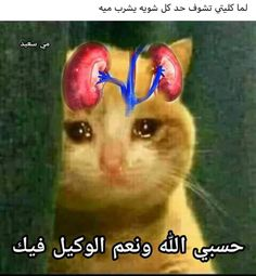 Arabic Memes, Arabic Funny, Arabic Quotes, Really Funny Memes, Funny Jokes, Crying Meme, Image Memes, Funny Comments, Workout Videos