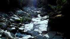 Immerse yourself in #nature @HarmonyRidgeNC #MyLifeCouldUseMore #camping
