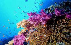 Sari Express Travel » Cruise to Mahmya Ras Mohamed in Sharm El Sheikh