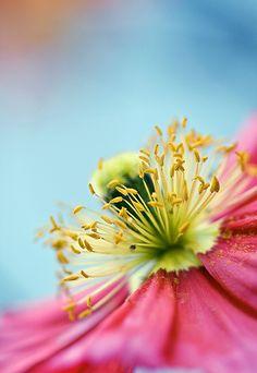 Pink Beauty #macro #photography #flower