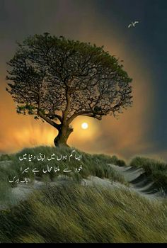 A.H Urdu Quotes, Poetry Quotes, Best Quotes, Qoutes, Awesome Quotes, Life Quotes, Deep Words, True Words, Sufi Poetry