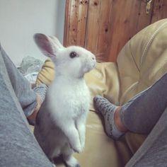 Little animal, sweet bunny - Cookie