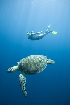 Jaja! I have done this before ... with a camera! Love turtles swimming under water.