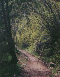 Millcreek Canyon Pipeline - beginner mountain biking trail.