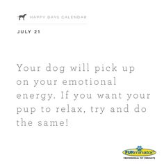 Your #dog will pick up on your #emotional #energy. If you want your pup to relax, try and do the same!