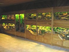 This Reptile display system was designed to house turtles and snakes indigenous to the area of NC. The lower sections drain for easy maintenance. Entire display showcase wall display was designed and built by www.jworlds.net
