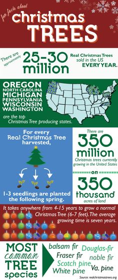 Christmas Trees in the US Infographic. #ArizonaAmber www.ArizonaAmber.com