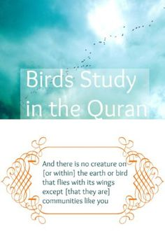 This week we're wrapping up our Bird Nature Study by learning all about the birds mentioned in the quran and hadith.