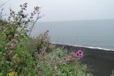 fiori e mare   Fiori di Stromboli   Pinterest