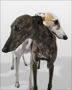 Plus de découvertes sur Le Blog des Tendances.fr #tendance #cute #animaux #blogueur