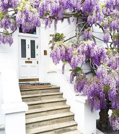 I can just smell the wisteria!