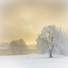 Icy landscape...