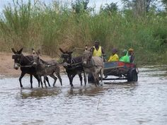 Limpopo Baby Buggy, Donkeys, Sled, Horse Racing, Rodeo, Farm Animals, Equestrian, First Love, Pony