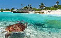 Discover tours and Activities in Playa del Carmen.  http://absolute-adventure-mexico.com/en/tours.html