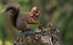 gentlesquirrelman Jack drink morning coffee after morning newspapper