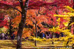 ทัวร์ญี่ปุ่นใบไม้แดง NOV 2014 : AUTUMN JAPAN GOLDEN ROUTE 2014 | ทัวร์ญี่ปุ่นใบไม้เปลี่ยนสี 7 วัน 5 คืน บินTG