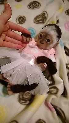 OOAK Artist Bear Needle Felted Baby Capuchin Monkey So Real | eBay