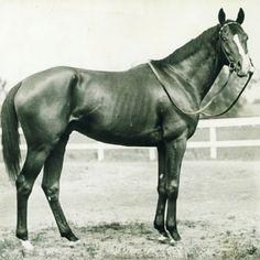 Gallant Fox...Triple crown winner 1930 (2nd TC winner)