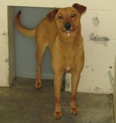 Lee County Animal Services Adoption   This dog is beyond out of time! She is 2 years old and spayed. There is no cost to adopt from this high kill shelter.