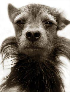 ritratti-foto-di-cani-randagi-abbandonati-traer-15